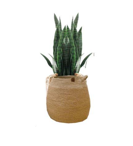 Big Jute Basket with plant
